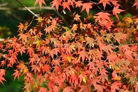 秋色模様の写真素材 [FYI03129592]