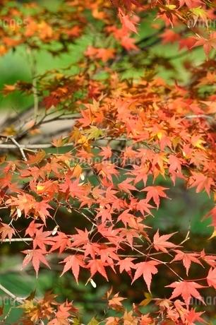 秋色模様の写真素材 [FYI03129593]