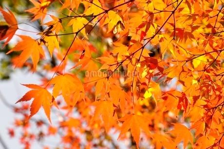 秋色模様の写真素材 [FYI03129594]