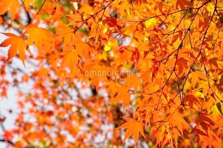 秋色模様の写真素材 [FYI03129595]