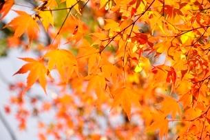 秋色模様の写真素材 [FYI03129596]