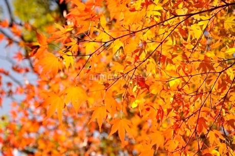 秋色模様の写真素材 [FYI03129597]