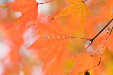 秋色模様の写真素材 [FYI03129598]