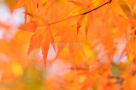 秋色模様の写真素材 [FYI03129599]