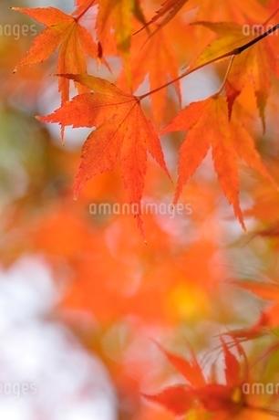 秋色模様の写真素材 [FYI03129600]