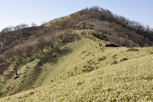 笹原の不動ノ峰の写真素材 [FYI03129683]