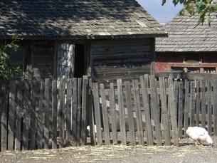 牧場の鳥の写真素材 [FYI03129745]