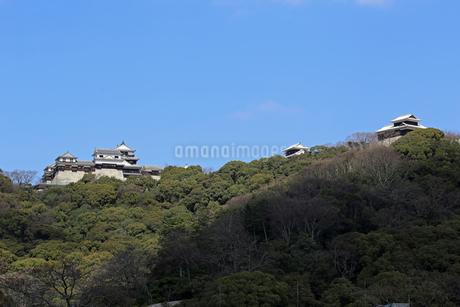 堀之内からの松山城の写真素材 [FYI03129883]