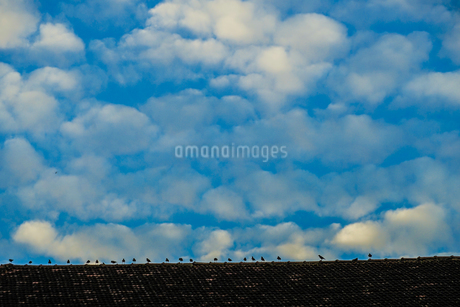 青空と小鳥のイメージの写真素材 [FYI03129906]