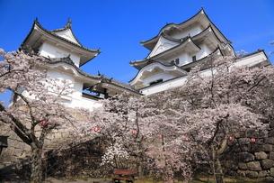 春の伊賀上野城の写真素材 [FYI03130106]