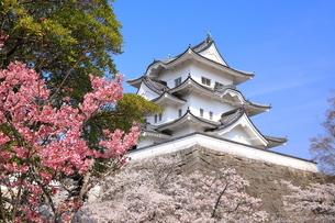 春の伊賀上野城の写真素材 [FYI03130107]