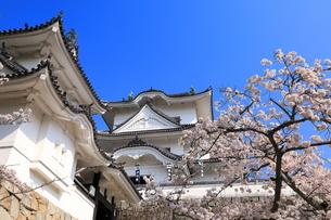 春の伊賀上野城の写真素材 [FYI03130109]