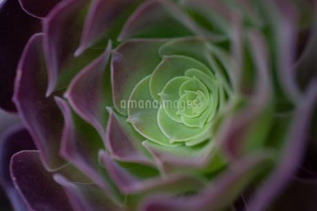 多肉植物の写真素材 [FYI03130143]