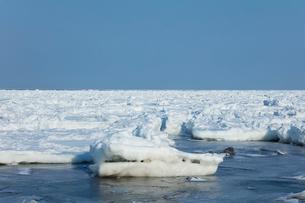 オホーツク海の流氷の写真素材 [FYI03130165]