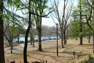 午後の井の頭公園の写真素材 [FYI03130344]