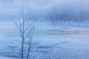 夜明けの大正池の写真素材 [FYI03130934]