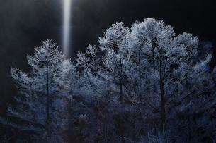 霧氷に射す光の写真素材 [FYI03130937]