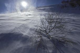 地吹雪舞う八方尾根の写真素材 [FYI03130944]