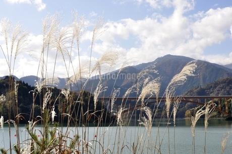 ススキと丹沢と宮ヶ瀬湖の写真素材 [FYI03131133]