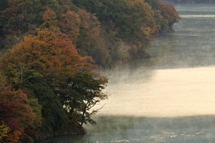 紅葉と川霧の湖畔の写真素材 [FYI03131147]