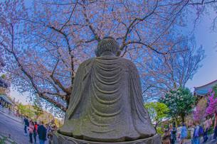 満開の桜と鎌倉長谷寺の風景の写真素材 [FYI03131190]