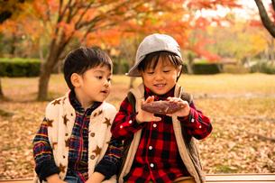 秋の公園で焼き芋を食べる子供の写真素材 [FYI03131388]
