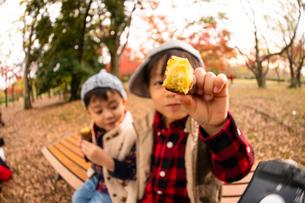 秋の公園で焼き芋を食べる子供の写真素材 [FYI03131395]