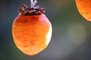 干し柿の風景の写真素材 [FYI03131441]