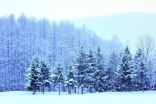 富良野の森 雪景色の写真素材 [FYI03131784]