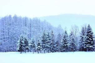 富良野の森 雪景色の写真素材 [FYI03131785]