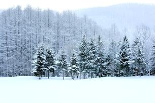 富良野の森 雪景色の写真素材 [FYI03131790]
