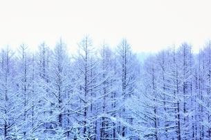 富良野の森 雪景色の写真素材 [FYI03131793]