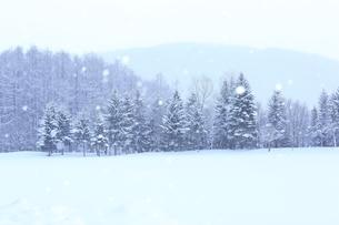 富良野の森 雪景色の写真素材 [FYI03131798]