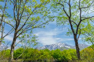 新緑のしら池から雨飾山を望むの写真素材 [FYI03132020]