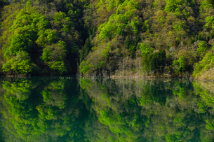新緑のリフレクションが美しい徳山ダムの朝の写真素材 [FYI03132187]