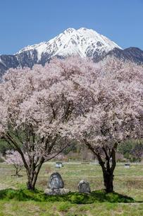常念道祖神の桜と常念岳の写真素材 [FYI03132188]