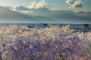 弘法山の桜と北アルプスの夕景の写真素材 [FYI03132190]