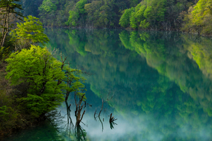 新緑の徳山ダムの写真素材 [FYI03132194]