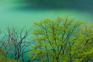 徳山ダムの新緑とエメラルドグリーンの湖面の写真素材 [FYI03132196]