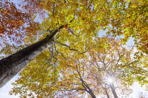 紅葉する樹々たちの写真素材 [FYI03132240]