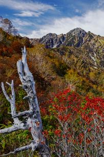 秋の紅葉と五竜岳の写真素材 [FYI03132241]