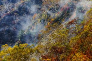 紅葉する遠見尾根の紅葉樹の写真素材 [FYI03132242]