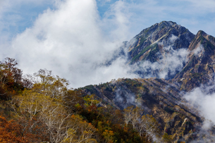 紅葉する遠見尾根と五竜岳の写真素材 [FYI03132245]