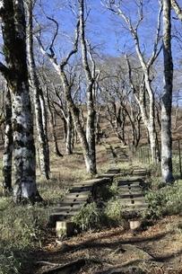 丹沢山への木道の写真素材 [FYI03132364]