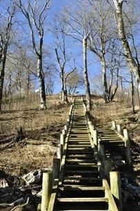 丹沢山への木道の写真素材 [FYI03132365]