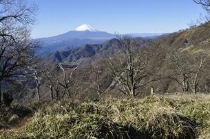 丹沢の山稜と富士山の写真素材 [FYI03132415]