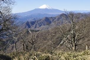 丹沢の山稜と富士山の写真素材 [FYI03132417]