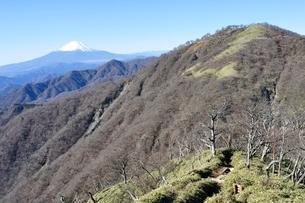 初冬の富士山と不動ノ峰の写真素材 [FYI03132453]