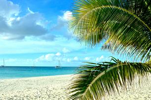 透明感のあるウヴェア島のビーチに生えるヤシの木とヨットと青い空に浮かぶ雲の写真素材 [FYI03132597]