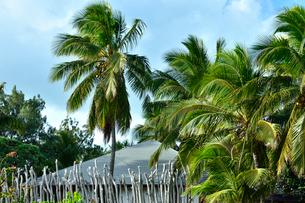 木の枝で作った伝統的なフェンスがあるヤシの木に囲まれた建物の写真素材 [FYI03132600]